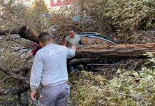 Un enorme árbol cayó sobre un coche en marcha en Príncipe de Vergara