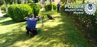 Rescatan un buitre leonado herido en un jardín de la carretera de Canillas