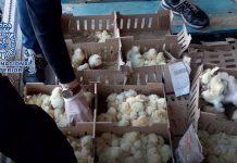 Buscan a los responsables de abandonar 26.000 pollitos en Barajas, de los cuales apenas 3.000 sobrevivieron